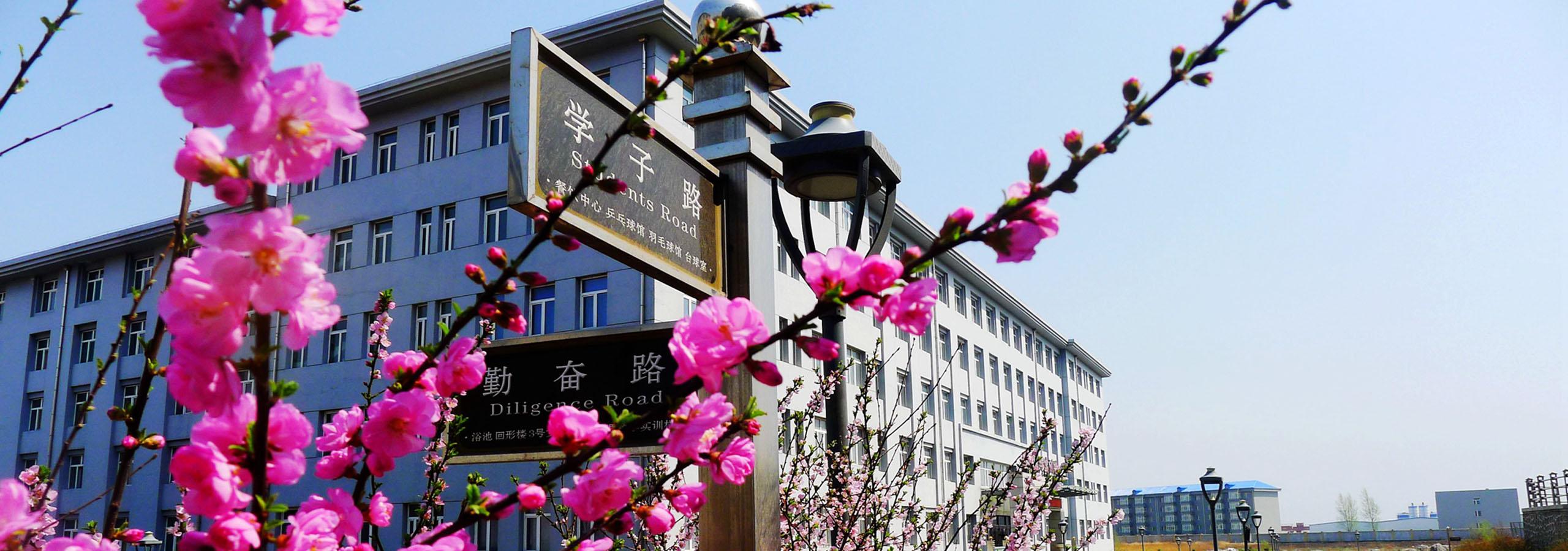五月的城市学院花海一片